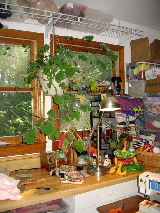 Peppermint-geranium-inside