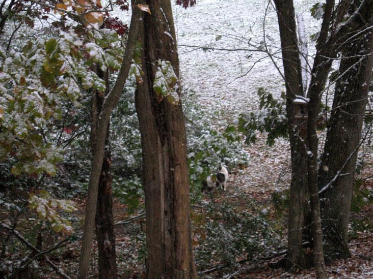 October-snow2