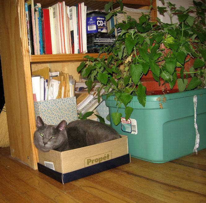Poozle-in-shoebox