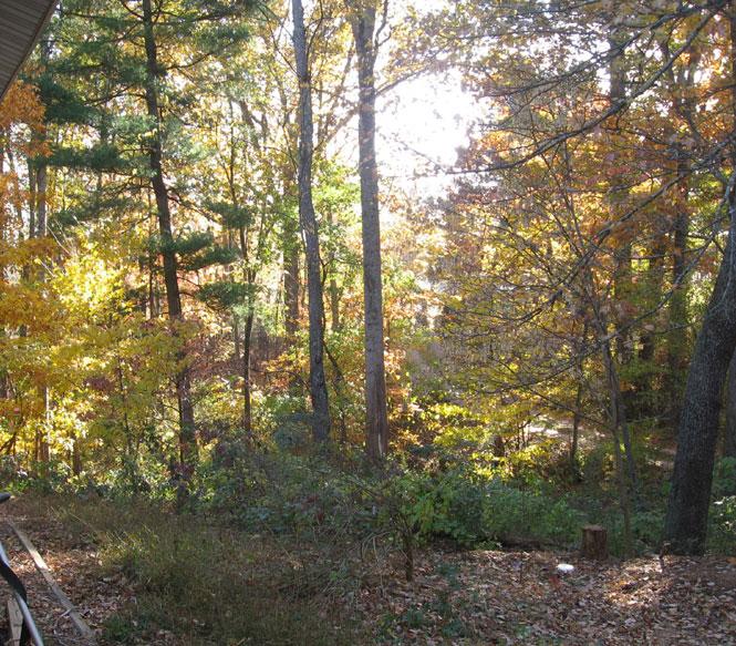 Glorious-autumn1
