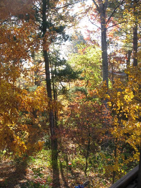 Glorious-autumn2