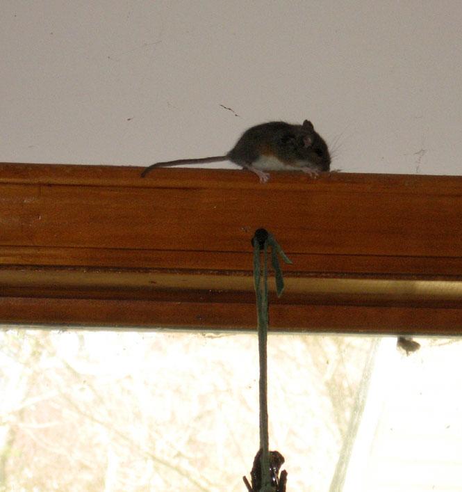 Mouse-cloesup