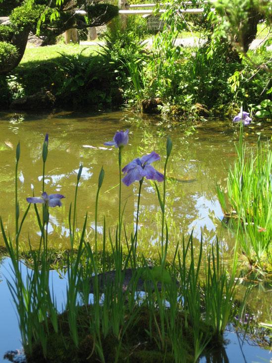 Tea-garden-#5