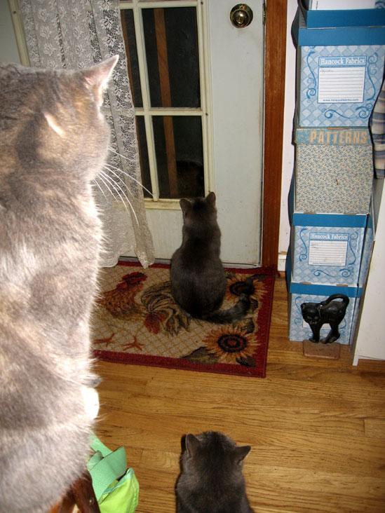 Watching-the-door