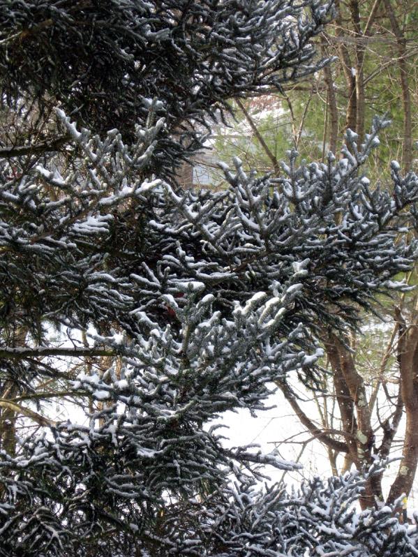 Snow closeup 1-2-8