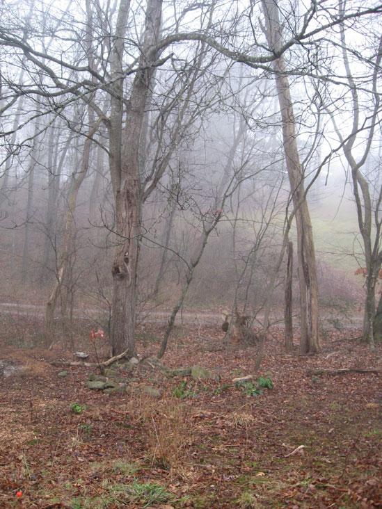 Foggy-morning1