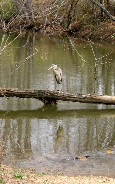 Heron-alone
