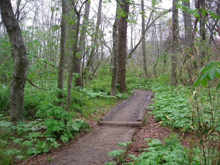 Mayapple-path1
