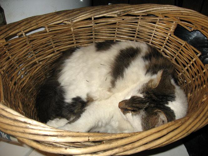 Sam-basket