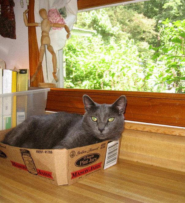 Poozle-box-2