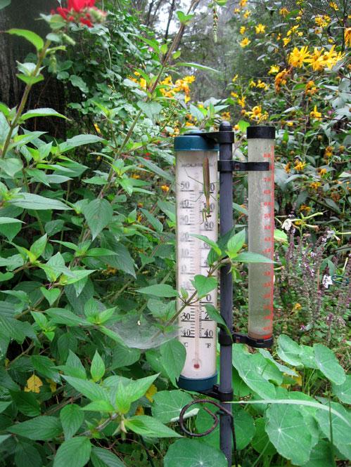 Mantis-on-rain-gauge