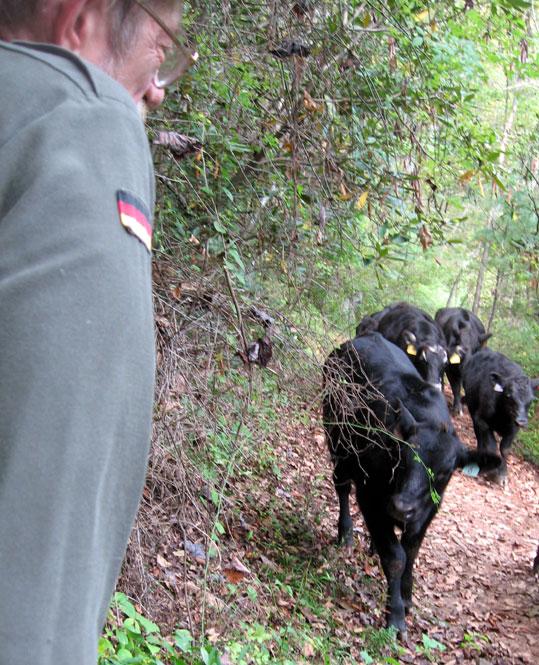 Suspicious-calf