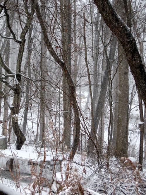 Snowy-yard1