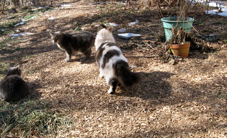 3-cats-in-the-sun