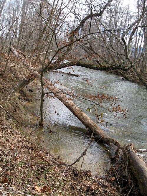 Fallen-tree2