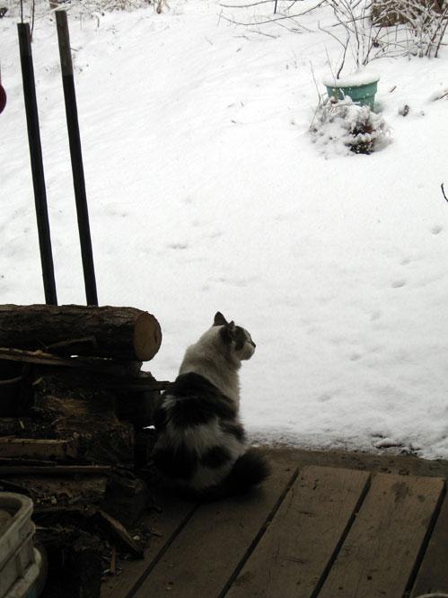 Sam-more-snow