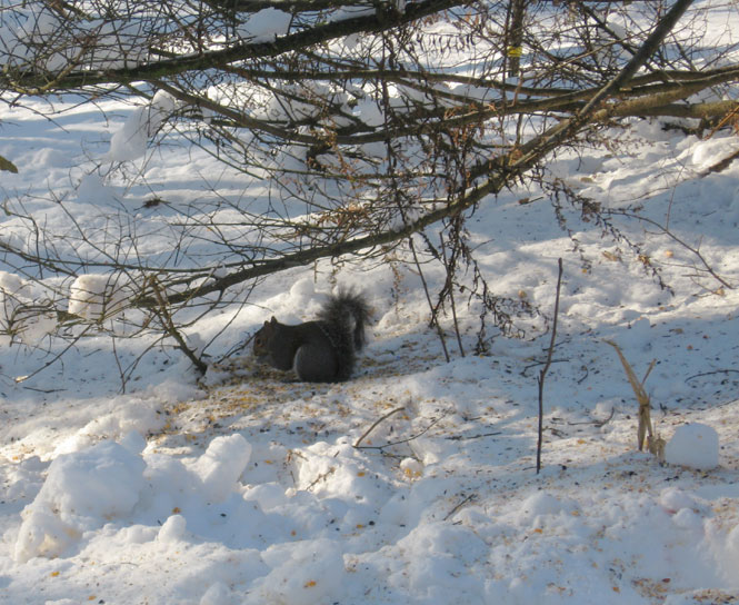 Squirrel-in-snow2