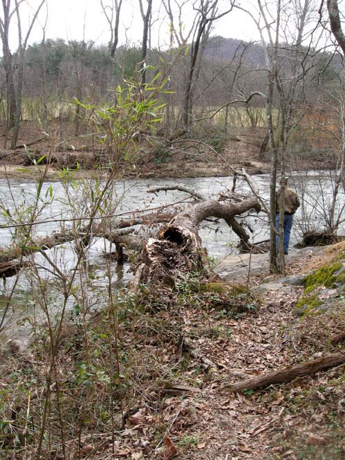 Fallen-tree1