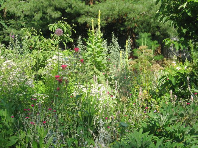 Summer-flowerbed