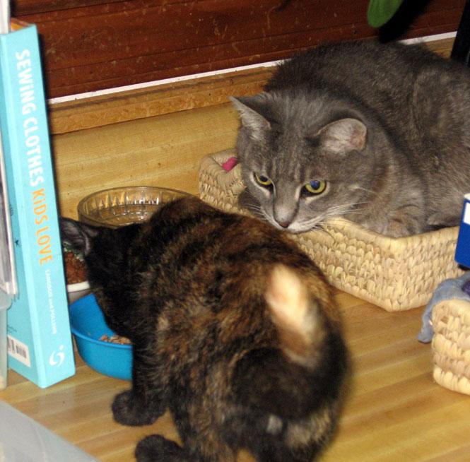 Pixie-and-ocie1