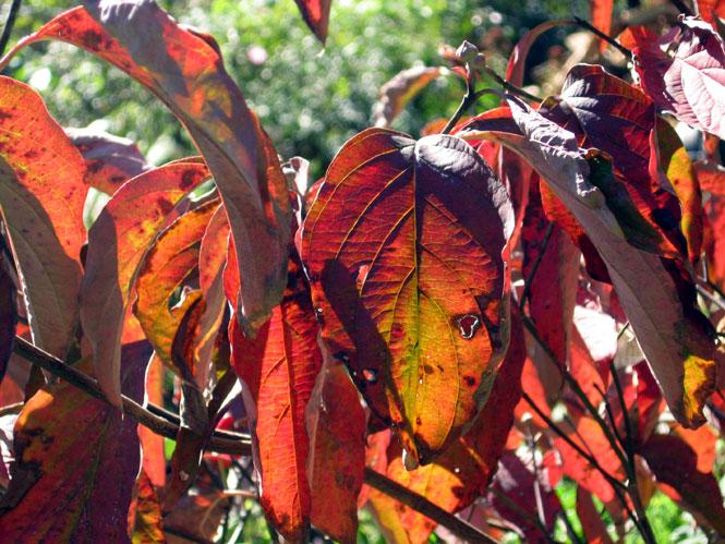 Autumn-leaves4