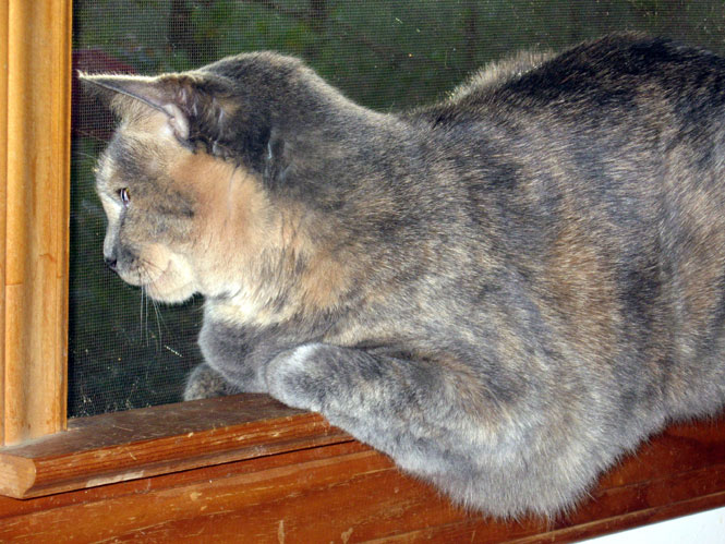 Dinah-in-the-window