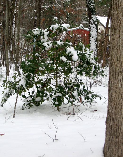 Jan-snow3