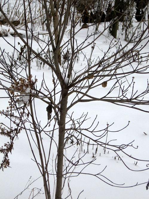Jan-snow14