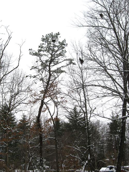 Crows-nest1