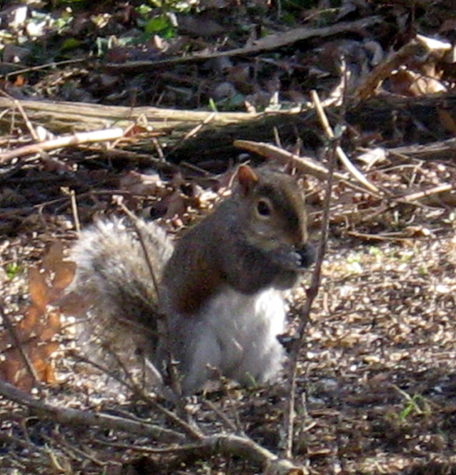 Squirrel-closeup2