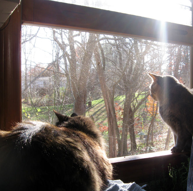 Cats-at-the-window1