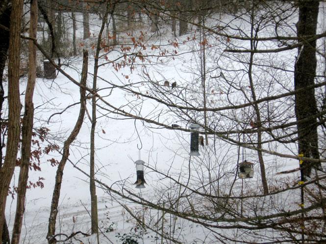 Snowy-feeders