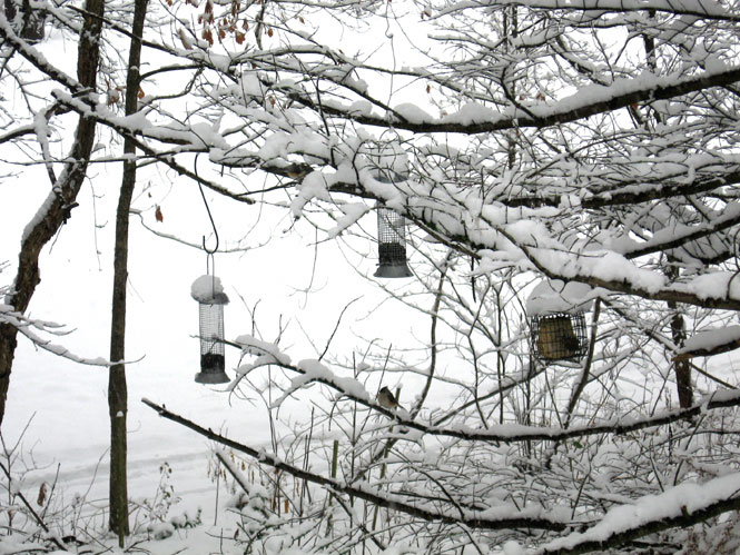 Snow-with-feeders2