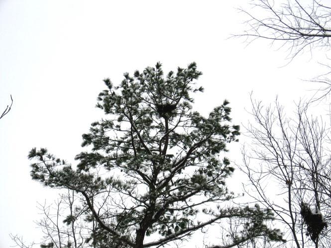 Crows-nest2
