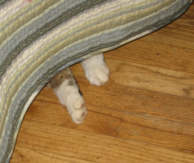 Sam-feet