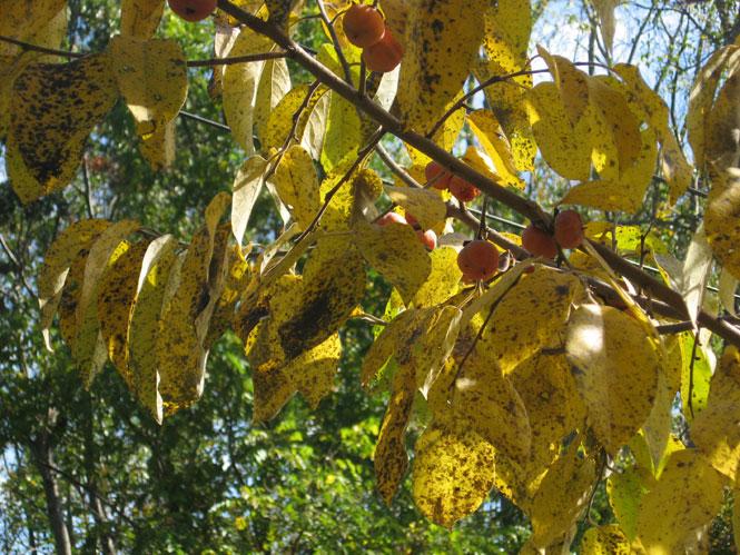 Fall-simmons