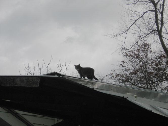 Ysabeau-on-roof