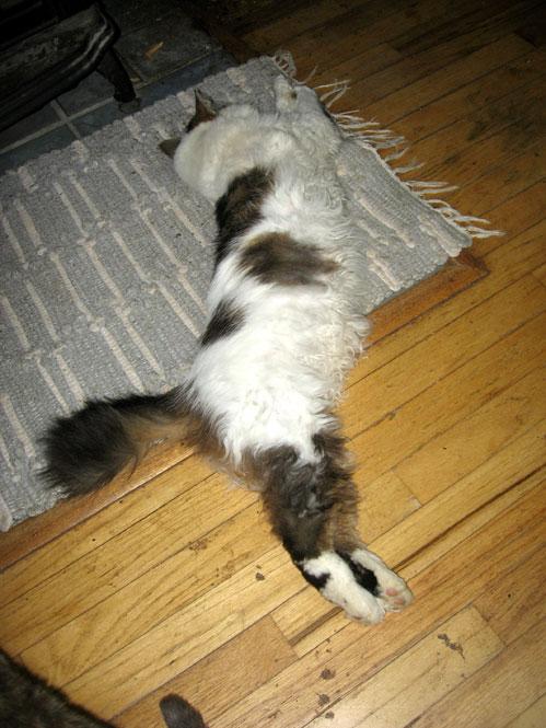 Sam-stretching