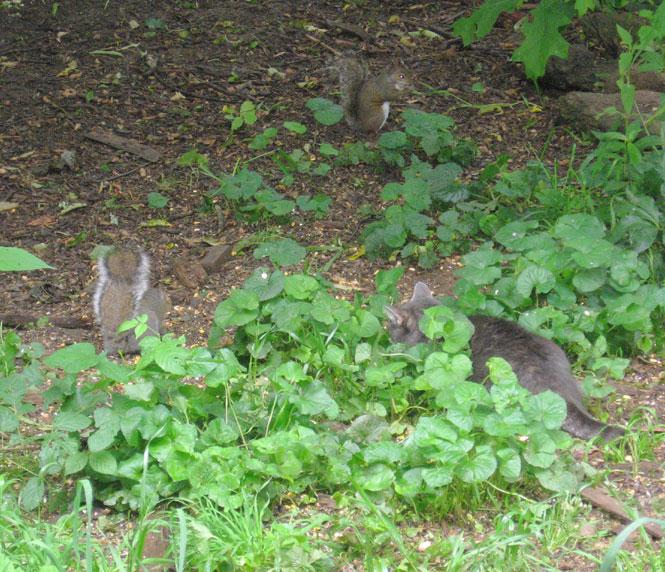 Yard-critters-5