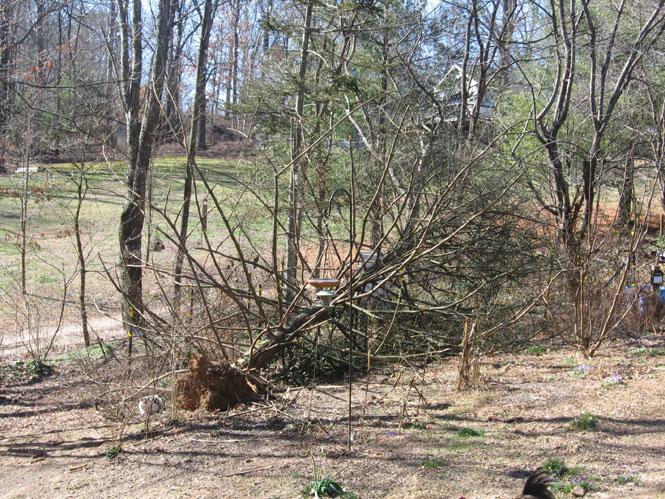 Tree-down-1