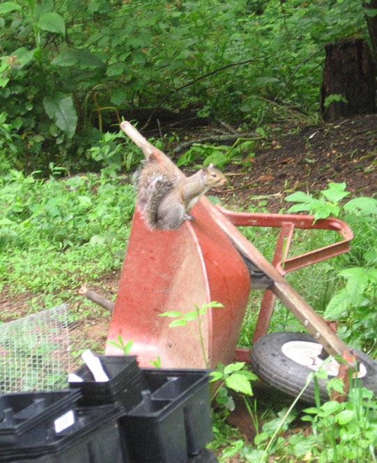 Yard-critters-3