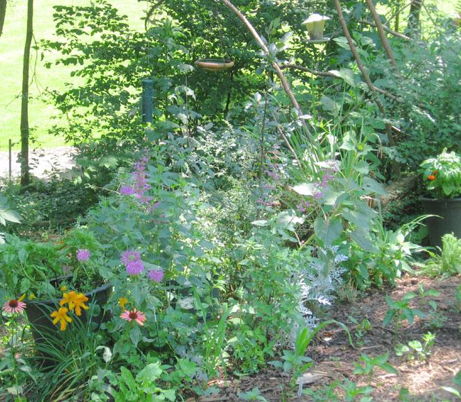 June-garden5