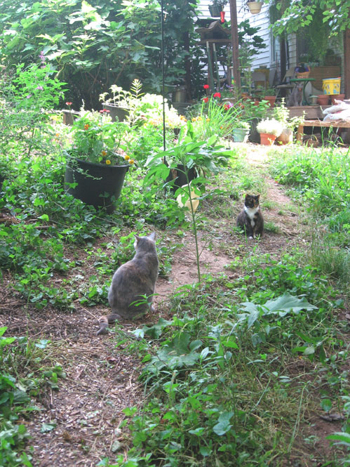 Cats-in-the-path