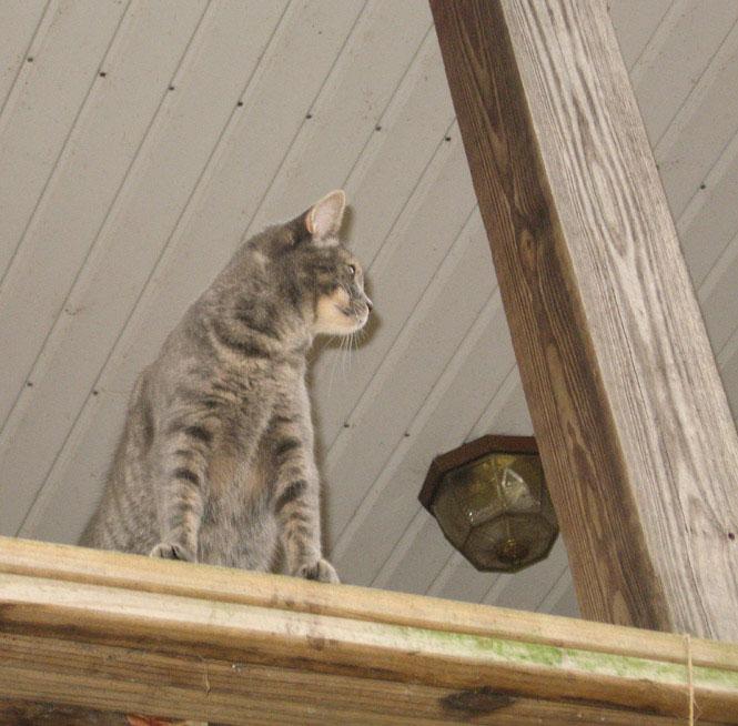 Ysabeau-on-porch-rail