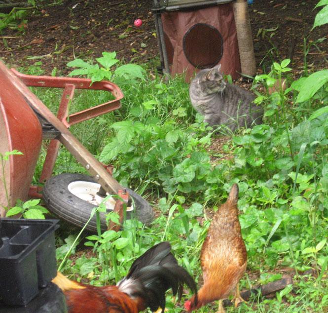 Yard-critters-2