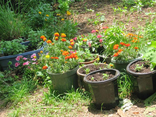 June-garden2