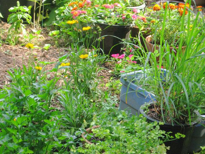 June-garden4