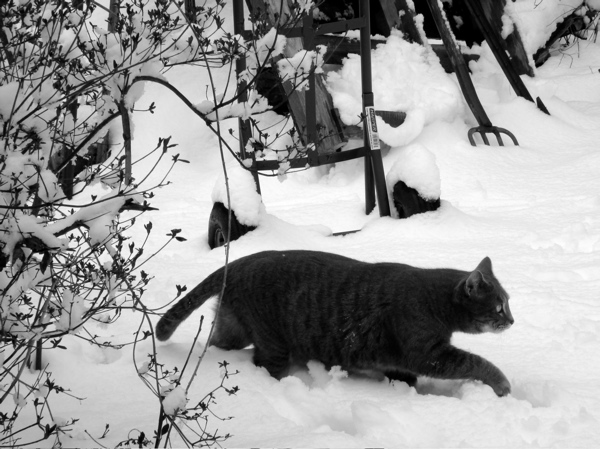 Faus in snow