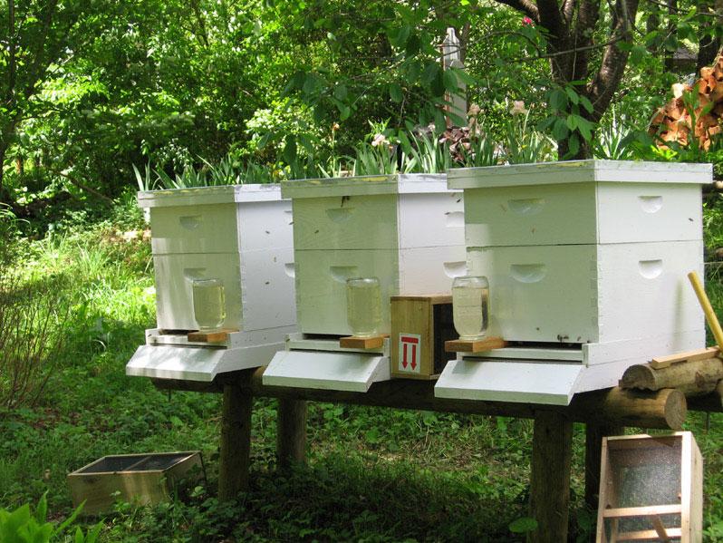 Beehivessetup