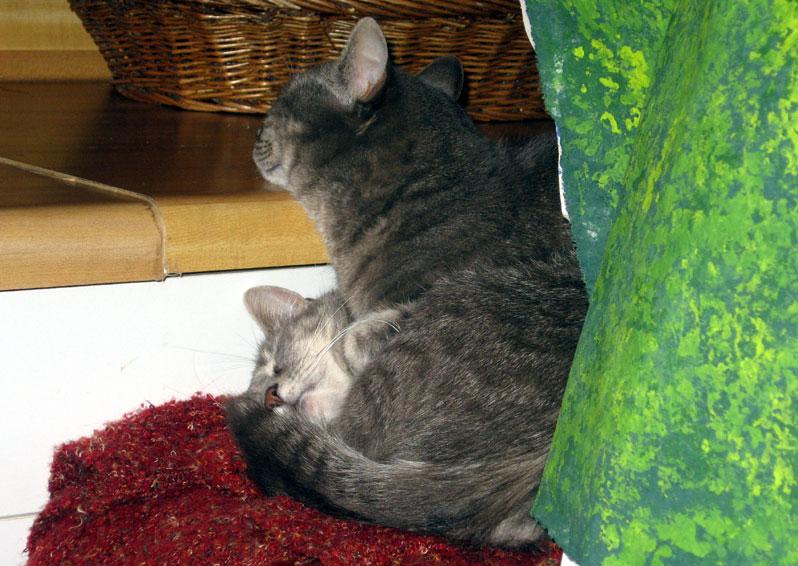 Catsinsmallspace1